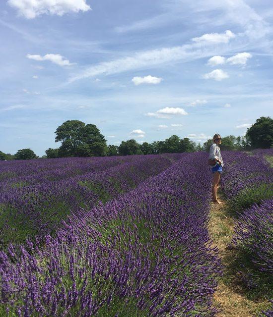 Day Trip: Lavender Fields